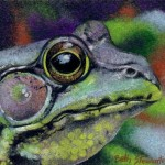 Coloured pencil drawing of Bullfrog head