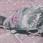 Coloured pencil drawing of Pigeon behind downtown market