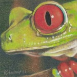Coloured pencil drawing of Red-Eyed Tree Frog head