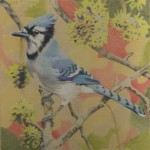 Coloured pencil drawing of Blue Jay in Sweetgum tree