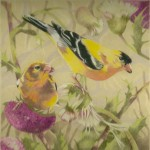 Coloured pencil drawing of an American Goldfinch pair