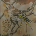 Coloured pencil drawing of Pine Siskin in Sweetgum tree