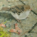 Coloured pencil drawing of Sparrow with maple keys in Victoria Park