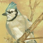 Coloured pencil drawing of Blue Jay on gold background