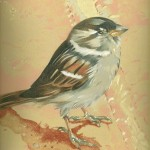 Coloured pencil drawing of Sparrow at Hoover Dam