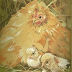 Coloured pencil drawing of Fat chicken with two chicks