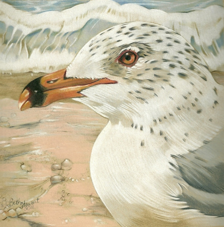 Coloured pencil drawing of Ring-billed Gull