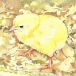 Coloured pencil drawing of Chick on sawdust