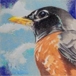 Coloured pencil drawing of American Robin against deep blue sky