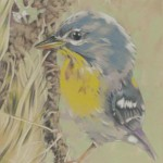 Coloured pencil drawing of Northern Parula