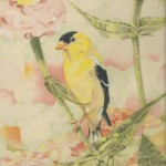 Coloured pencil drawing of American Goldfinch