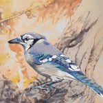 Illustration of a Blue Jay facing left
