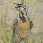 Coloured pencil drawing of Eastern Meadowlark on muted green and lilac background