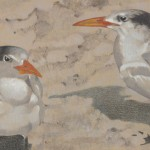 Royal Terns DETAIL