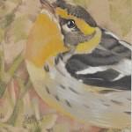 Warbler (Blackburnian)