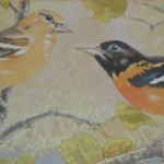 Baltimore Oriole Pair