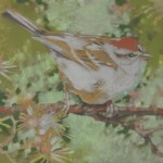 Chipping Sparrow (Trill)