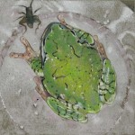 Coloured pencil drawing of Grey Tree Frog with cricket