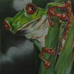 Coloured pencil drawing of Red-Eyed Tree Frog on reed