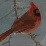 Coloured pencil drawing of Cardinal on branch