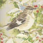 Coloured pencil illustration of a Northern Mockingbird with berries