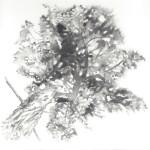 Agawa Tree