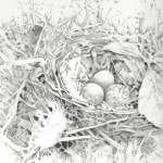 Nest with three eggs